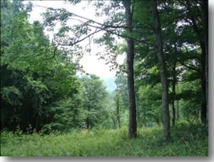 photo of trees in Alleghany County