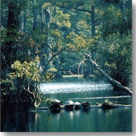 a  photo of the Tar River, NC, showing turtles in the stream