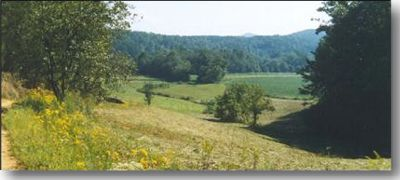 The Yadkin Valley